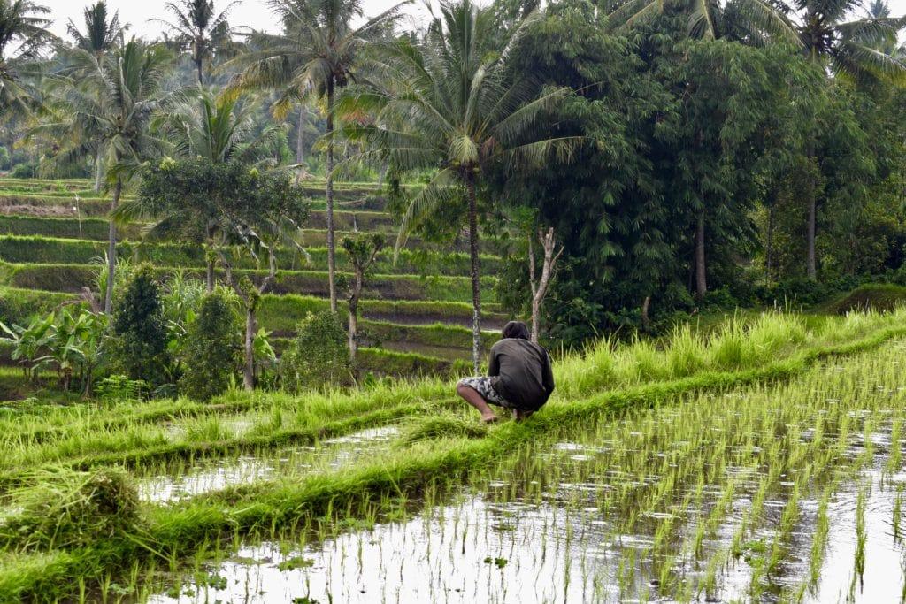 Rismark Bali