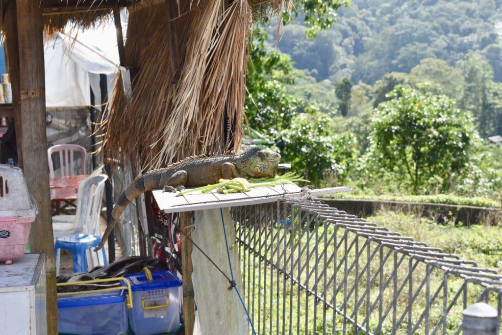 Dyr på Bali