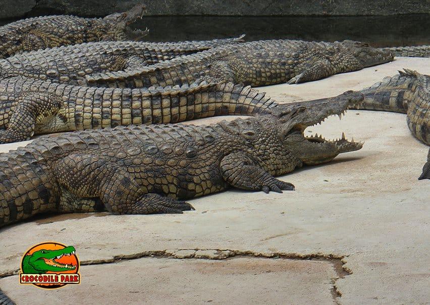 crocodile park malaga