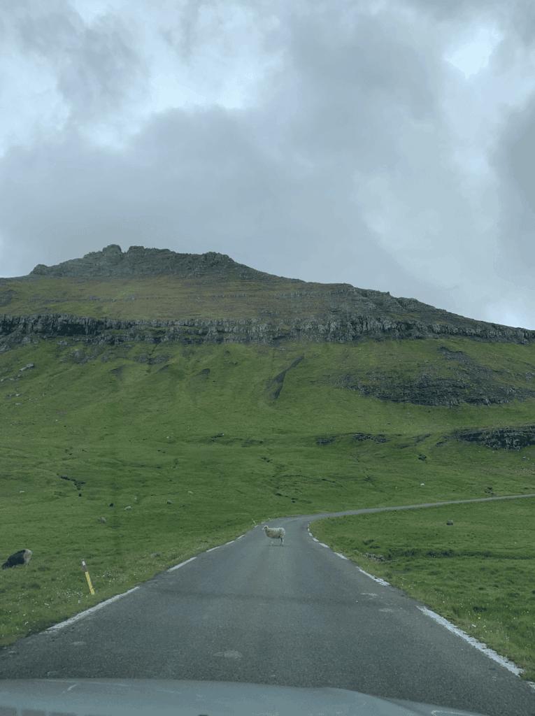 færøerne billeje